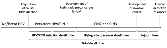 Figure 1 outlines the natural history of the human papillomavirus (HPV) to induced cervical cancer (CC) pathway.  This pathway is not directly observable, yet the age of HPV acquisition and duration of preclinical disease (dwell time) impacts the effectiveness of prevention policies.  Dwell time is shown in the diagram as the time from acquisition of a causal HPV infection to the clinical detection of cancer.